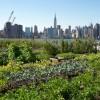 Urban Agriculture Courtesy Ask.com
